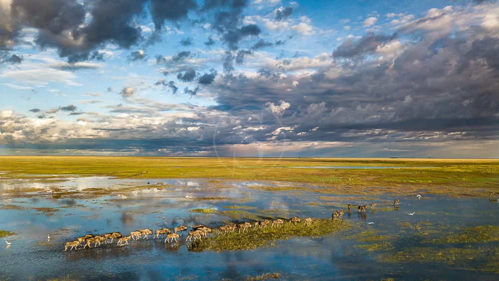 Safaris à Liuwa Plains, Zambie © Time and Tide Will Burrard