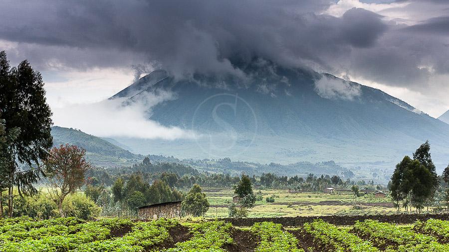 Gorille des montagnes, Rwanda © Christophe Courteau
