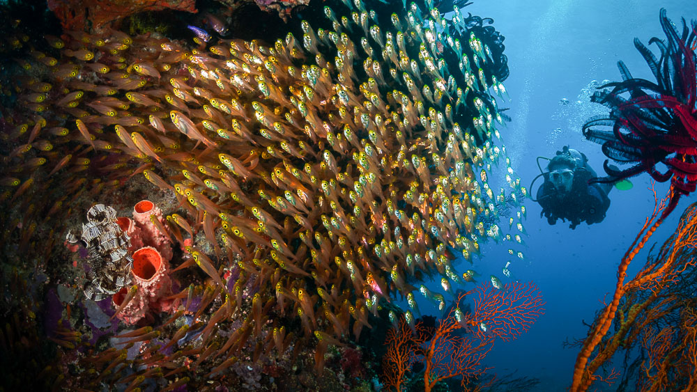 Lombok Gili Kedis Island, Indonésie