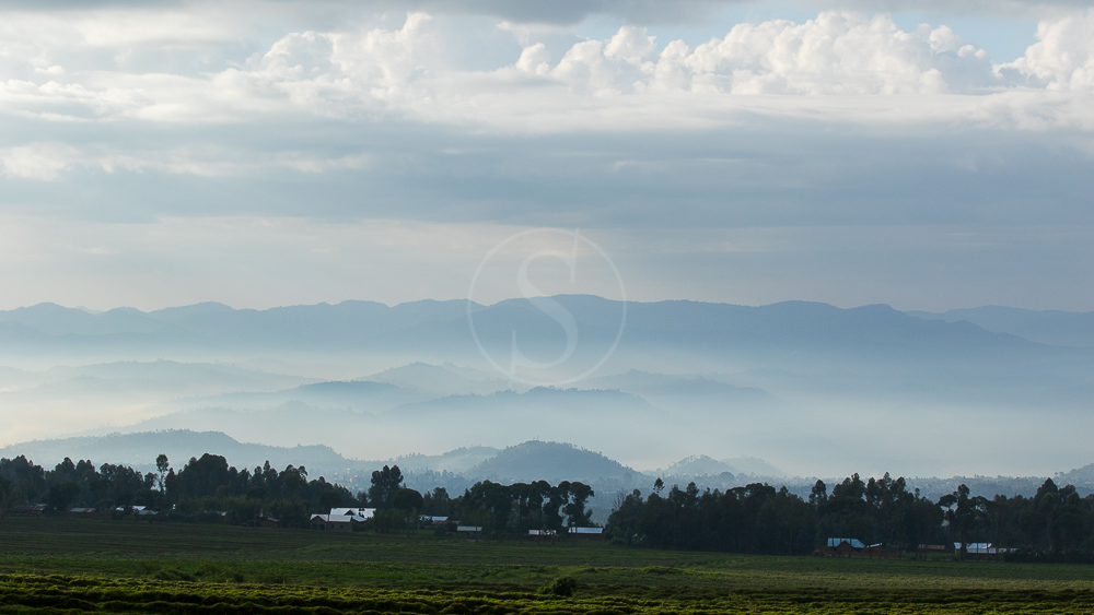 Parc des volcans, Rwanda © L. Guillot
