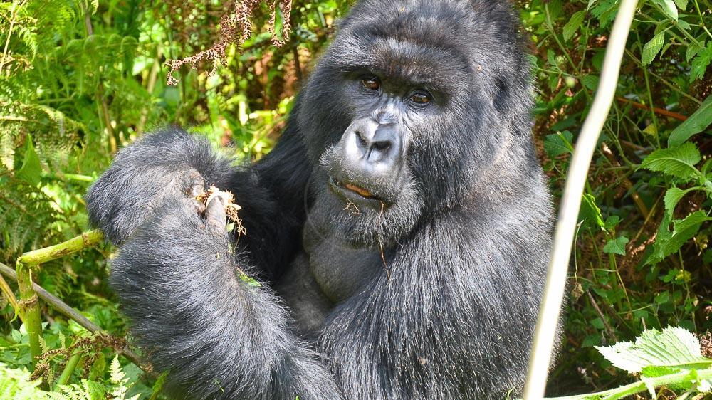 Safari au Rwanda © Julien M.