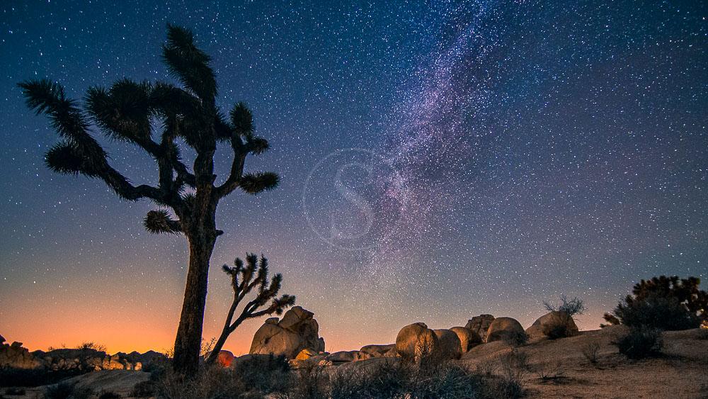 Joshua Tree National Park, Etats-Unis © Shutterstock