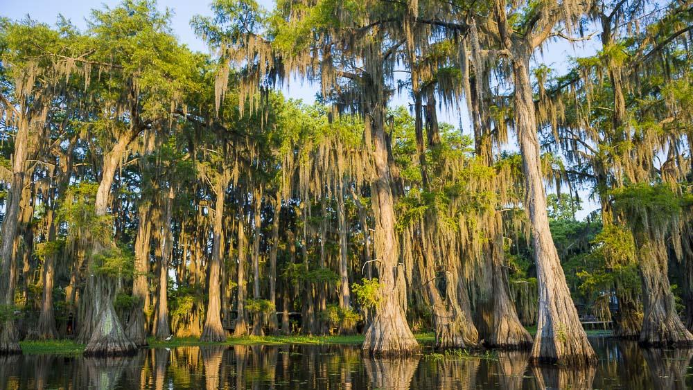 Louisiane, Etats-Unis © Shutterstock
