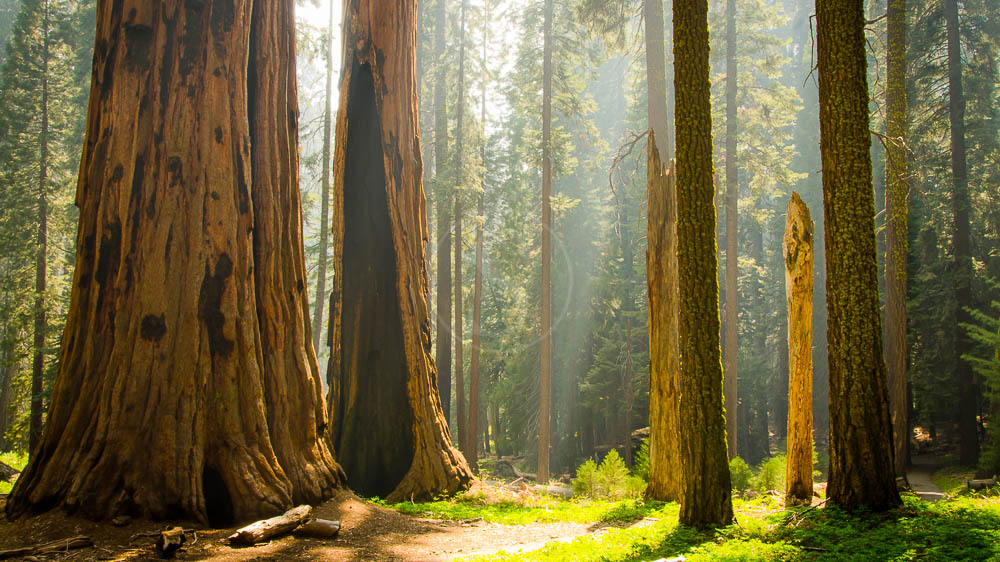 Sequoia National Park, Etats-Unis © Shutterstock
