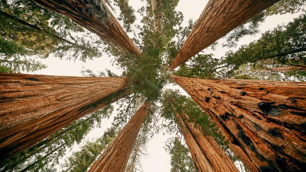Sequoia National Park, Etats-Unis © Shutterstock