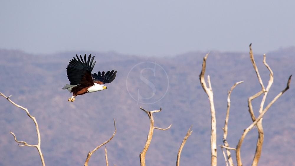Lac Kariba, Zimbabwe © Etendues Sauvages