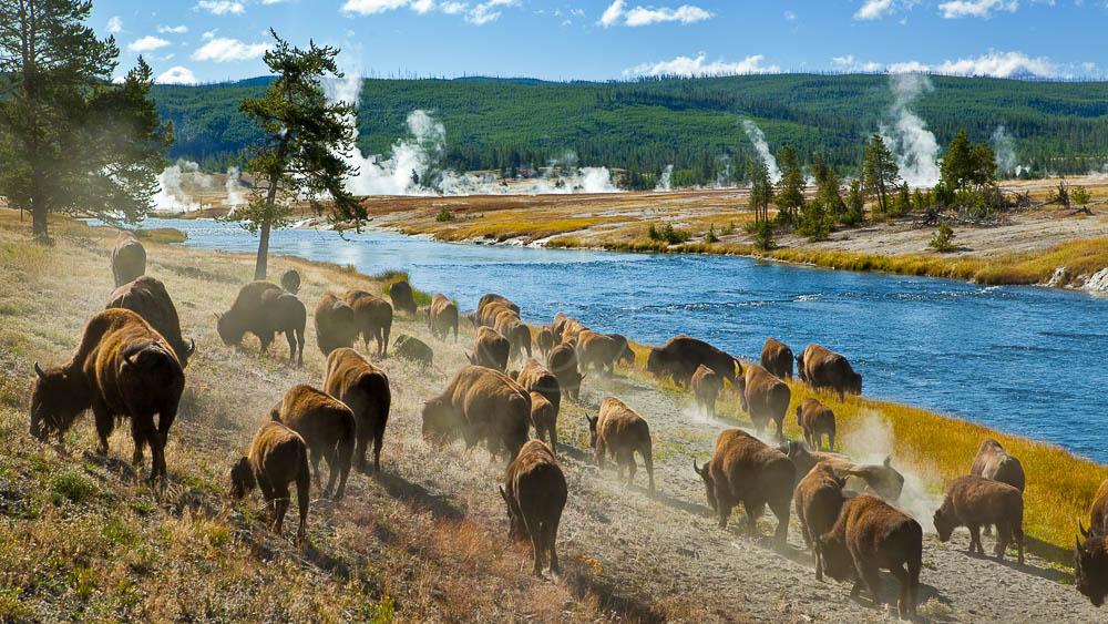 Yellowstone National Park, Etats-Unis © Shutterstock
