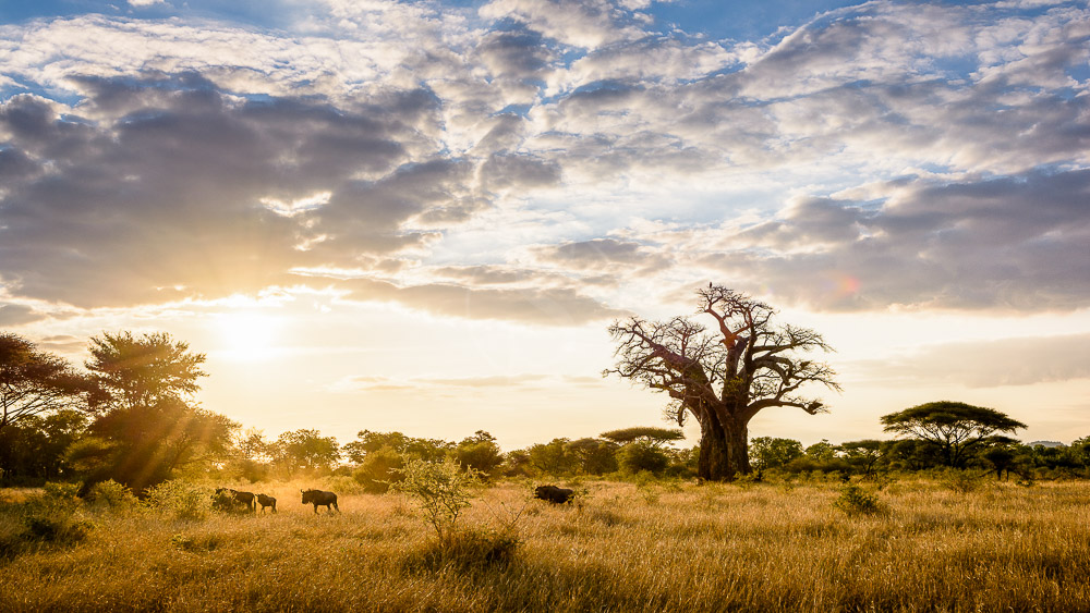 Singita Pamushana, Zimbabwe © Singita