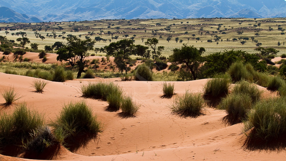 Paysage de la Namib Rand Nature Reserve, Namibie