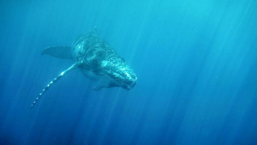 Observer les baleines à Tahiti, Polynésie © Tahiti Islands Travel