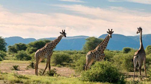 Safari en Afrique © More Properties