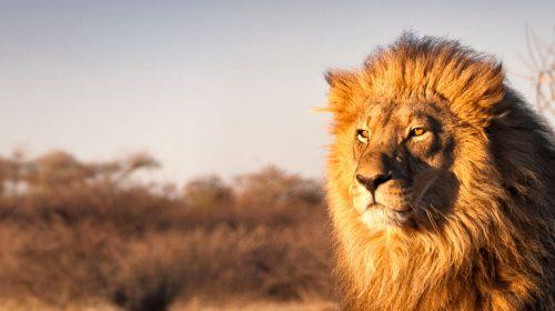 Voyage de luxe en Afrique du Sud