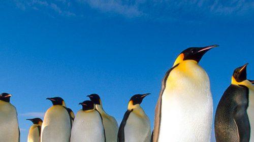 Croisière de luxe en Antarctique