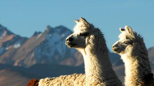 Voyage de luxe en Bolivie
