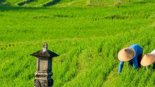 Voyage de luxe à Bali