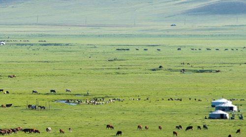 Voyage sur mesure en Mongolie