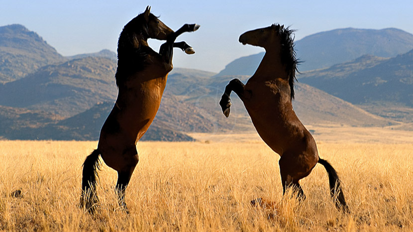 Desert Horse Inn - Gondwana Collection, Namibie