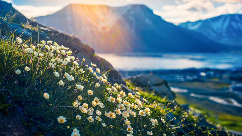 Découverte du Spitzberg, Norvège