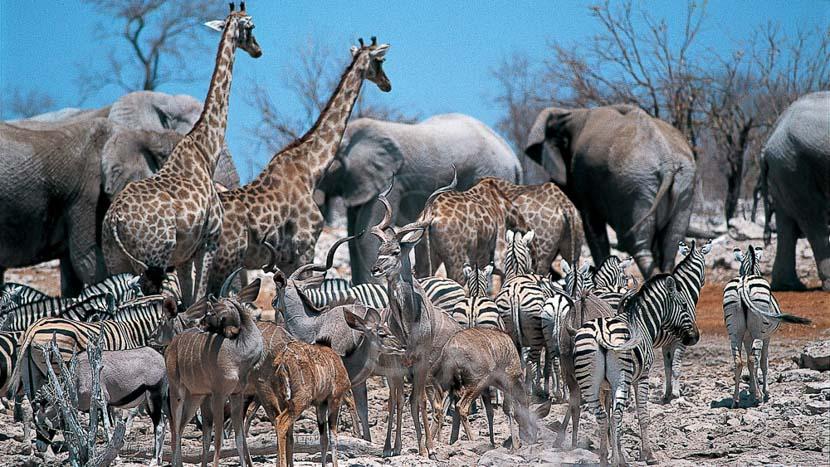 Safari en Namibie © Alain Pons