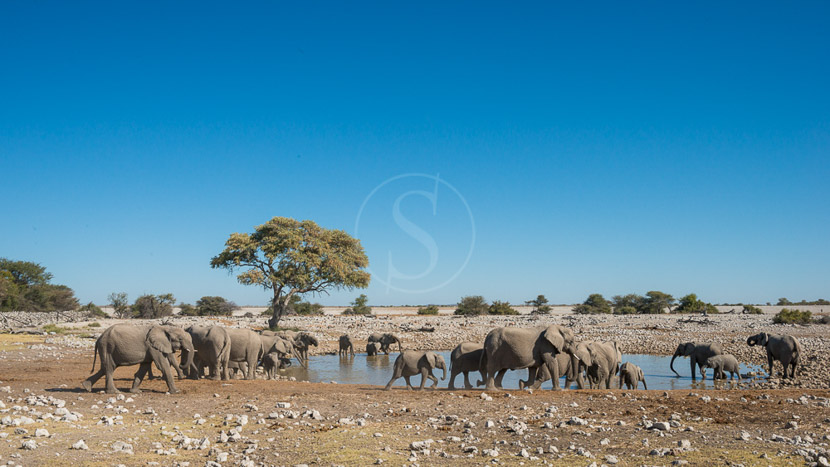 Andersson's Camp, Namibie © Ongava, Olwen Evans