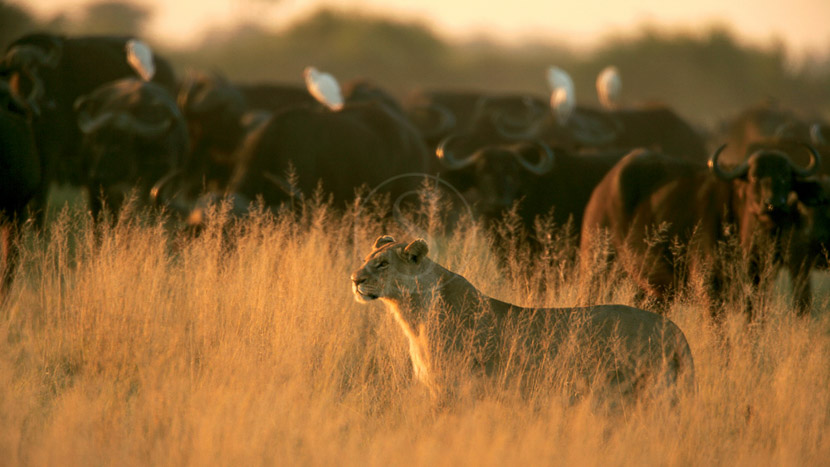Duba Plains Camp, Botswana © Beverly Joubert