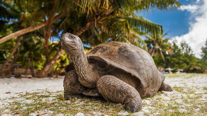 Île Curieuse, Seychelles © Shutterstock