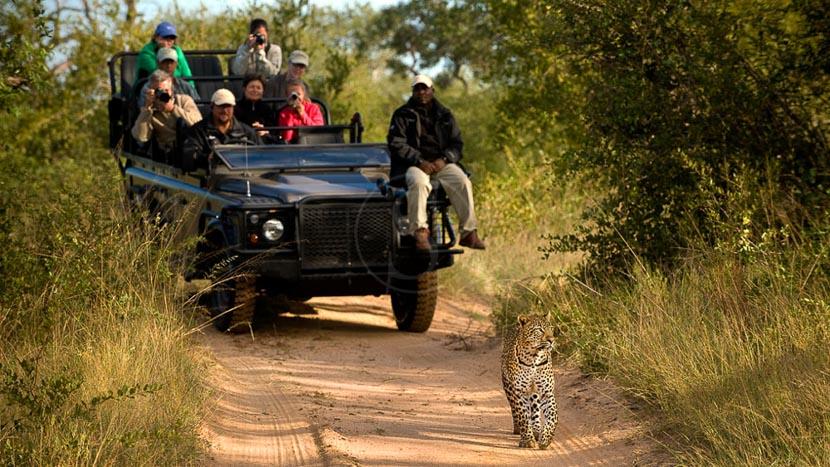 Safaris à Lion Sands, Afrique du Sud © More Properties